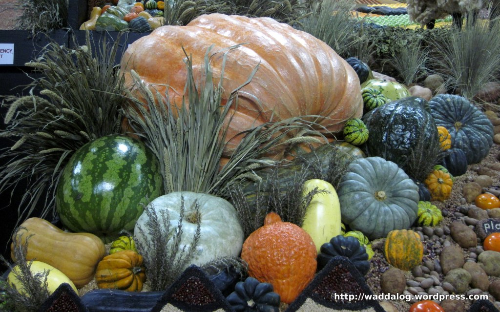 Cornucopia: the 200kg pumpkin surrounded by the also rans, from the Northern District display