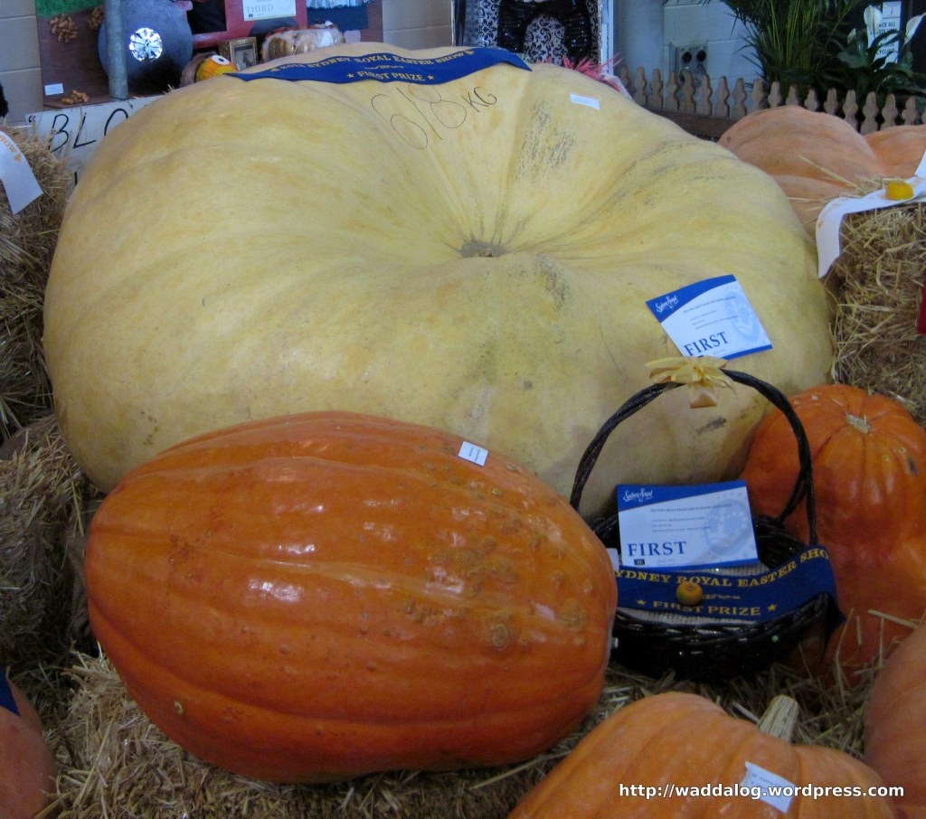 618kg pumpkin, world record, grown by Mr Dale Oliver, '2013 The Great Backyard Pumpkin Challenge.'